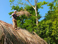 Roof thatching in kerala india a three party working model connecting spice village hotel periyar forest and native villagers Stock Photos