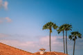 Rooftops and palmtrees Royalty Free Stock Photo