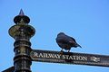 Rook on signpost standing a wrought iron railway station in the pavilion gardens buxton derbyshire england uk western europe Stock Photo