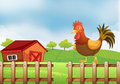 A rooster above the fence illustration of Royalty Free Stock Images
