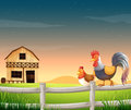 A rooster and a chicken near the barnhouse illustration of Stock Photography