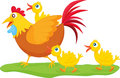 Rooster and ducklings Royalty Free Stock Photo