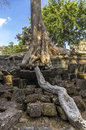 A root of the sprung tree roots trees on ta prohm temple at angkor in siem reap province Stock Images