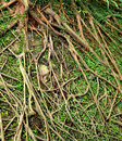 Root tree background Stock Image