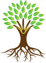 Root tree Royalty Free Stock Photo
