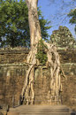 Roots above the ground of sprung trees on ta prohm temple at angkor in siem reap province Stock Photography
