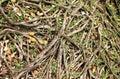 Roots banyan tree Royalty Free Stock Photo