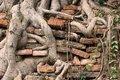 Roots burrow the wall of a tree in ancient bricked as time goes by ruin into bricks Stock Photos