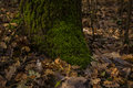 Roots of tree with green moss