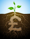 Roots and tuber in shape of pound symbol sprout Royalty Free Stock Photo