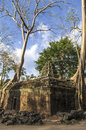 Roots visible above the ground of sprung trees on ta prohm temple at angkor in siem reap province Royalty Free Stock Photo