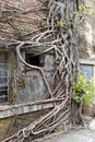 The roots on the wall of old factory house in redtory creative garden, guangzhou, china