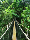 Rope bridge in the jungle across river Royalty Free Stock Photos