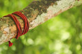 Rope tied on big branch Royalty Free Stock Photo