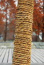 The rope wrapped around tree Stock Images