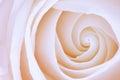 Rosa rose macro abstrakt begrepp Royaltyfria Foton