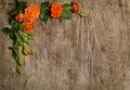 Rosas com as folhas no fundo de madeira Imagem de Stock Royalty Free
