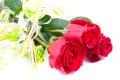 Rosas vermelhas isoladas no branco Imagens de Stock Royalty Free