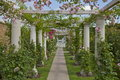 Rose Arbour Stock Image
