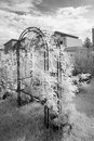 Rose arch infrared monochrome photograph of a metal covered with leaves of roses swhich is standing on grass in front of bushes Royalty Free Stock Images