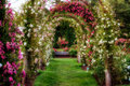 Stock Photography Rose Arches