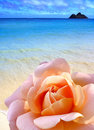 Rose beach Royalty Free Stock Photography