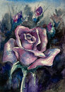 Rose beautiful single lavender watercolor painted Royalty Free Stock Image
