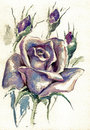 Rose beautiful single lavender watercolor painted Royalty Free Stock Images
