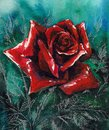 Rose beautiful single red watercolor painted Royalty Free Stock Images