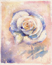Rose beautiful single white watercolor painted Stock Photography