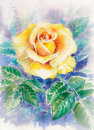 Rose beautiful single yellow watercolor painted Royalty Free Stock Images