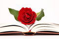 Rose book a red on a notebook on white background Royalty Free Stock Images