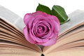 Rose Bookmark Royalty Free Stock Photo