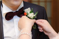 Rose boutonniere bride pinning to groom s suit Stock Photography