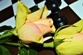 Rose, chess, love as a game Royalty Free Stock Photo