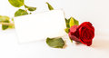 Rose and coupon on white background Stock Photo