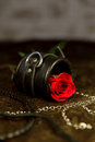 Rose and erotic toys red Royalty Free Stock Photography