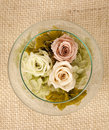 Rose flower arrangement Royalty Free Stock Photo