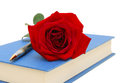 Rose flower and blue book isolated on white background Stock Images