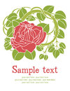 Rose flower card red design Stock Photography