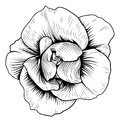 Rose Flower Engraved Vintage Woodcut Etching