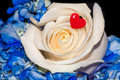 Rose Flower Love Red Heart Royalty Free Stock Photo