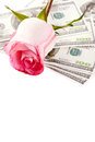 Rose flower and money Royalty Free Stock Photo