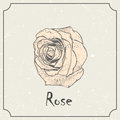 Rose flower. Vintage grunge marriage design template, floral artwork. Vector illustration of summer concept Royalty Free Stock Photo
