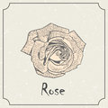 Rose flower. Vintage grunge marriage design template, floral artwork. Vector illustration of summer concept for Royalty Free Stock Photo