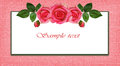 Rose flowers arrangement and frame on pink background Stock Images