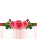 Rose flowers arrangement and frame on striped background Stock Photography
