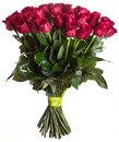 Rose flowers bouquet isolated Royalty Free Stock Photo