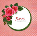 Rose flowers composition and frame on pink background Royalty Free Stock Image