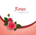 Rose flowers composition and holiday frame on pink background Royalty Free Stock Photos